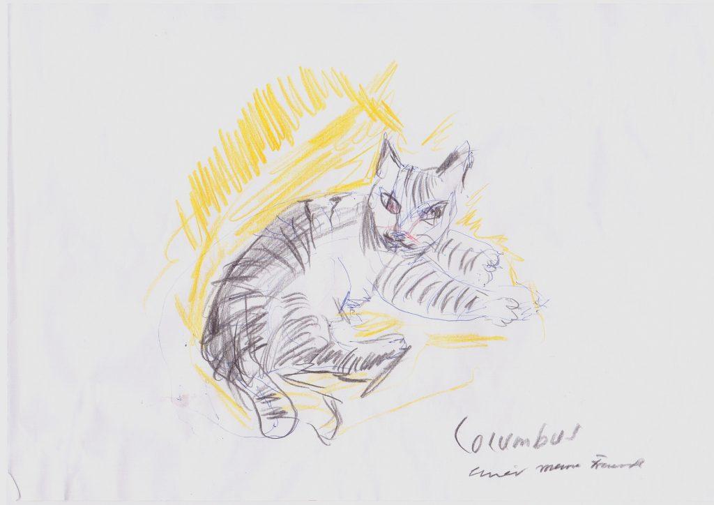 Katze Columbus